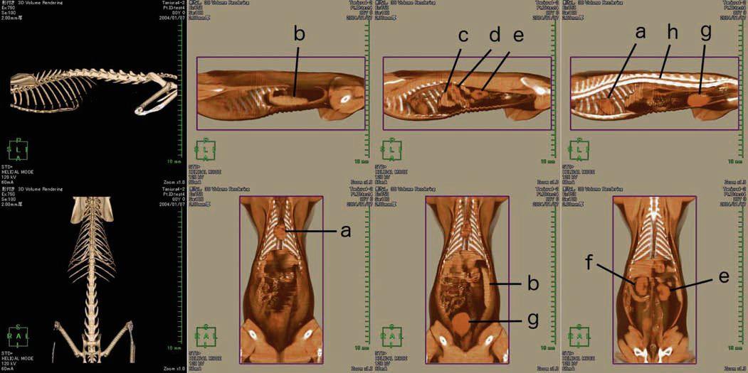 Anatomy – Humane Education in Veterinary Medicine