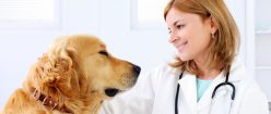 Humane Education in Veterinary Medicine